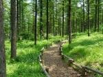 [숲에 on] 8. 대관령 전나무 숲
