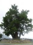 [숲에 on] 9. 천년의 나무와 함께 하는 이야기