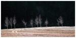 카메라에 담긴 아름다운 자작나무숲 모습