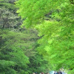 오월의 숲길 위 느리게 긋는 밑줄
