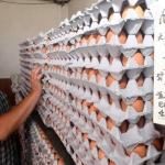 잘나가는 강원산 계란