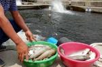 강원남부권 가뭄 극심 송어양식장 타격