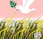 쌀의 정치학