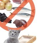 [동감 2℃] 고양이에게 위험한 먹거리