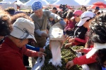 인제 산야초효소축제