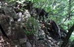 인제 대암산 멸종 위기 포유류 15종 서식