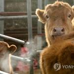 동장군 주춤…강원 9개 시군 한파특보 해제
