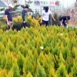 활기 찾는 나무시장