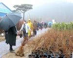 영서지역 최대규모 홍천 나무시장 개장