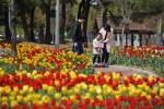 속초 청초호 유원지 튤립 천국