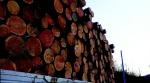 [TV 하이라이트] 깊은 산속 나무 베는 사람들