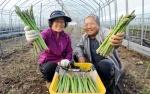 양구 아스파라거스 일본 수출길 오른다