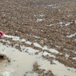 산불예방·가뭄해소·대기개선 '봄비 단비'