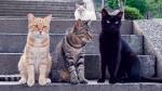 [TV 하이라이트] 한국·대만·일본 길고양이