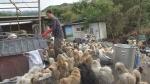 [TV 하이라이트] 폐쇄 위기 유기동물 보호소