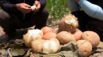 [TV 하이라이트] 여름철 갓 수확해 쪄낸 감자