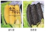 홍천군 친환경 색소찰옥수수 생산
