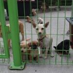 여름 휴가철 강릉에 버려지는 반려동물 급증