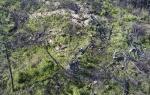 고성 산불피해지 벌목작업