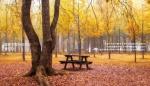 책으로 먼저 만나는 남이섬의 가을·겨울