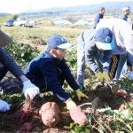 홍천 아시아나항공직원 농촌일손돕기