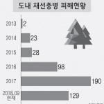 '소나무 에이즈' 재선충병, 올해 129그루 쓰러졌다