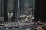 산불 피해현장에 나타난 생명