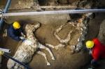 폼페이유적지 화석발굴