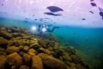 얼음  깨고 수중 비경에 '풍덩' 추위 녹이는 짜릿한 유영