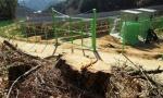 양구 도사리 태양광시설 벌목된 소나무 방치