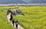 삼척 유채꽃축제 봄기운 만끽
