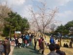 벚꽃 활짝 핀 노암동 남산공원 관광객 붐벼