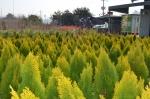 각양각색 160여종 묘목 푸릇푸릇 봄 들여가세요