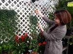 올해 잦은 미세먼지에 공기정화 식물 판매량 23% 증가