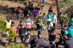 인제 남전리 구상나무 400그루 심기 구슬땀