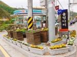 강촌 주민들 꽃 심기