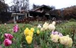 주인 잃은 정원에 찾아온 봄
