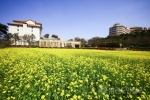 양양 유채꽃밭 관광명소 부상