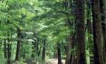 '한 호흡에  한 걸음씩' 느리게 걸어야 만나는 전나무숲의 맑은 숨결