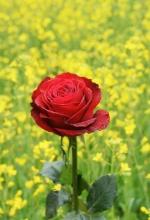 계절의 여왕과 꽃의 여왕 달콤한 유혹을 펼친다