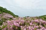 신록 숲과 연분홍 철쭉, 무릉도원 꽃길 속으로