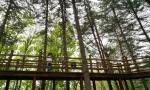 광치자연휴양림 무장애 나눔길 이달 착공