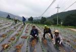 정선군의회 농촌 일손돕기