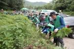 양구 생태계 교란식물 제거의 날 행사