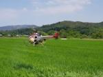 옥계농협 드론 항공방제