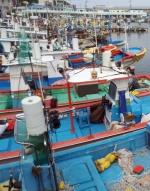 돌풍·폭우 몰고 '다나스' 북상 동해안 초긴장