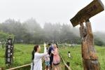 정선 고한 함백산 야생화축제