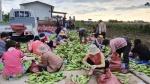 속초 노학동통장협 옥수수 후원