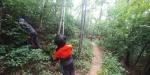 북부산림청, 매미나방·미국선녀벌레 방제 강화
