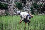 [전운성 교수의 세계농업문명 답사] 5.산악평야, 계단식 경작지에 핀 농업문명
